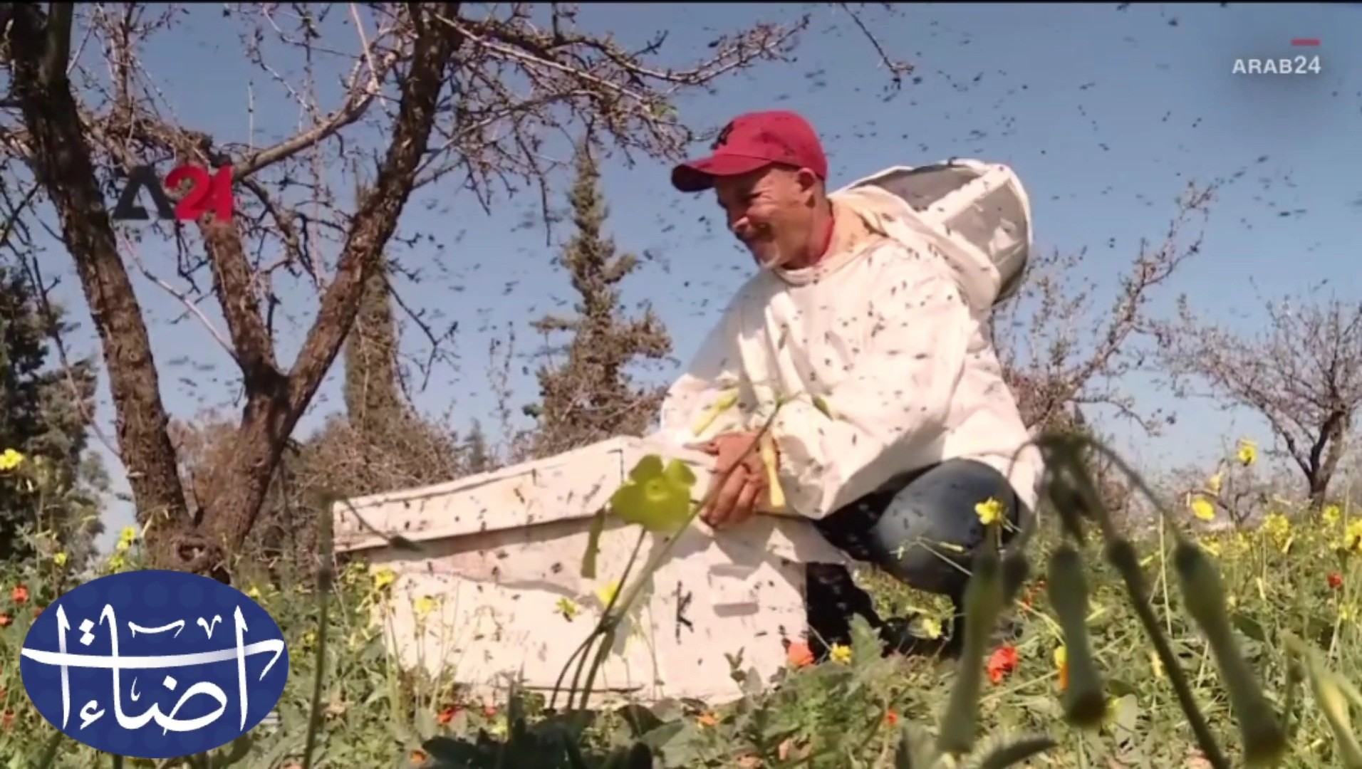 غرائب وطرائف لحية من النحل على وجه شاب تونسي